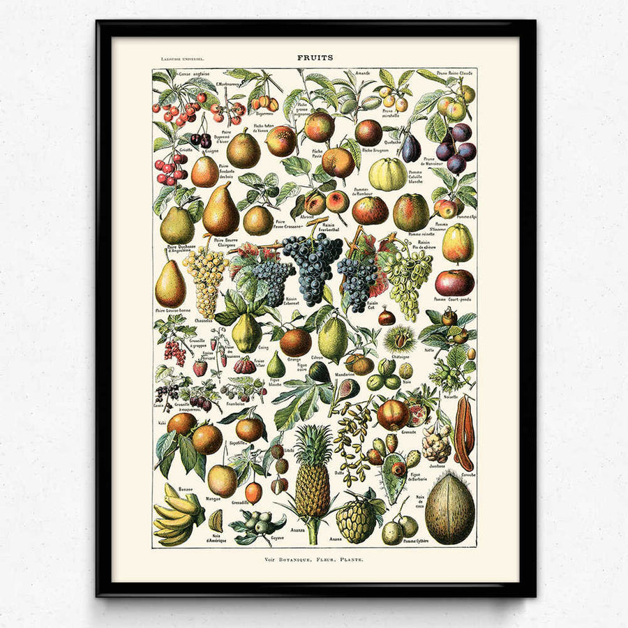 Shop for Vegetables and Fruit Vintage Print Set 2 - Orion Wells