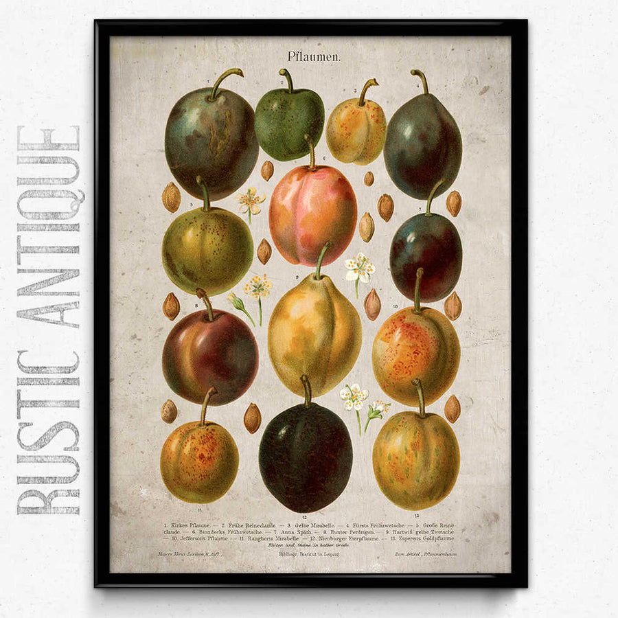 Shop for Plums Fruit Vintage Print - Orion Wells