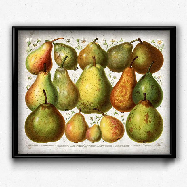 Pears Fruit Vintage Print - Orion Wells
