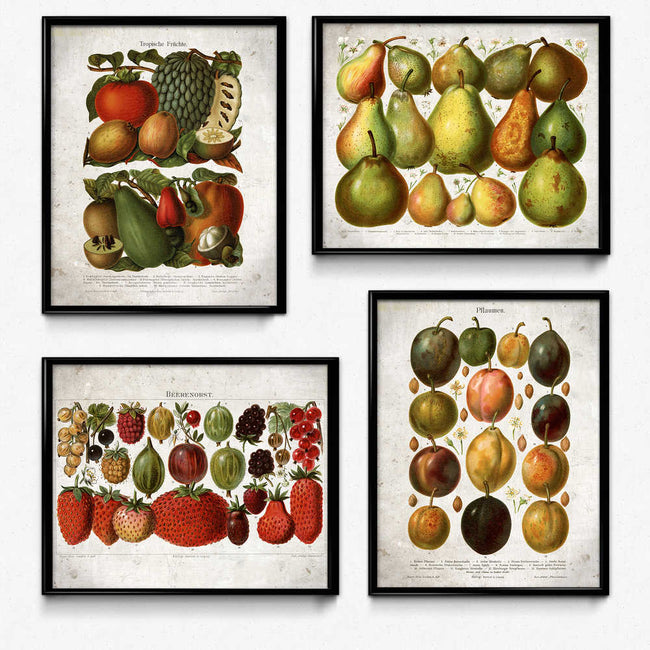 Fruit Vintage Print Set of 4 - Orion Wells