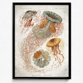Haeckel Vintage Print 4 - Kwallenprint - VP1153 - Orion Wells