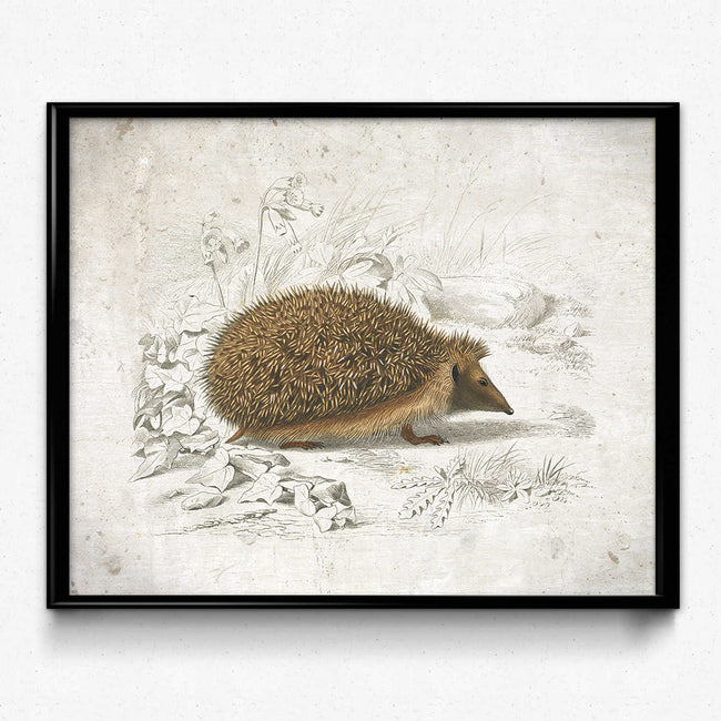 Shop for Hedgehog Vintage Print - VP1114 - Orion Wells