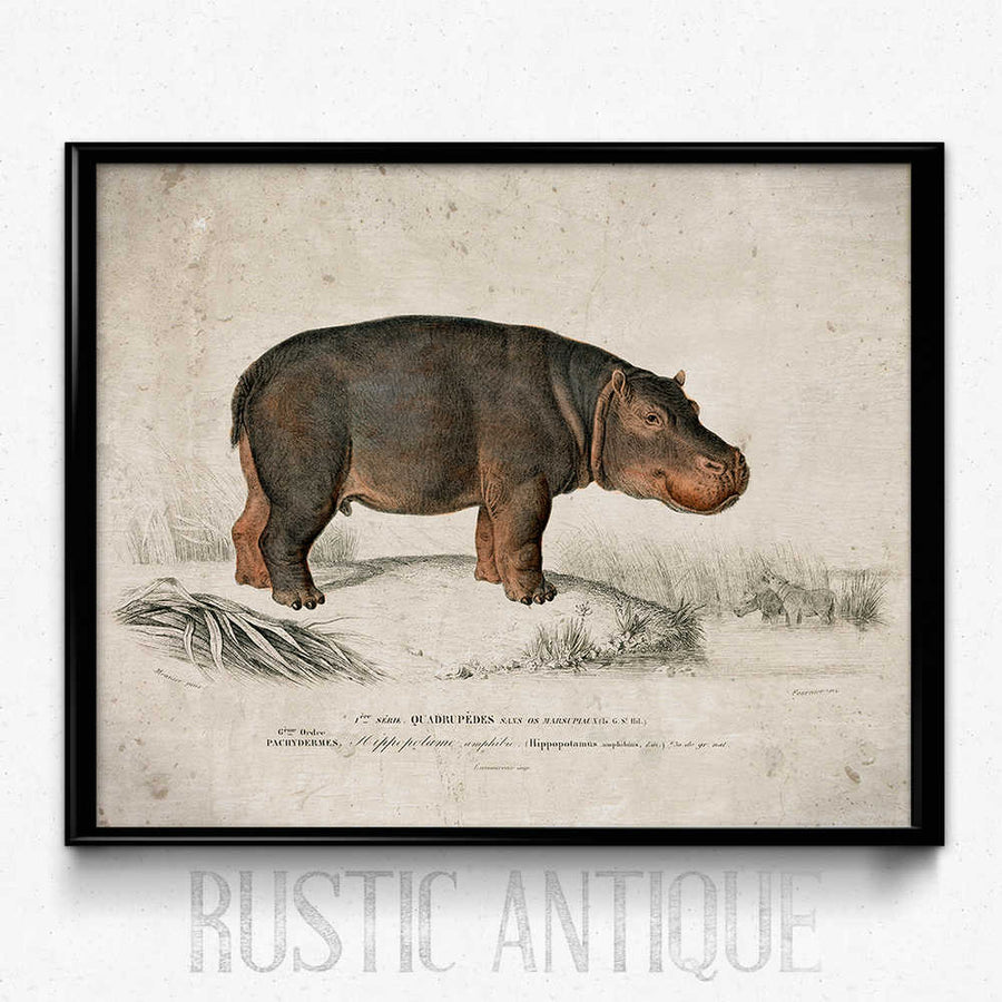 Shop for Hippo Vintage Print - Orion Wells