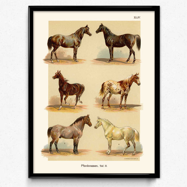 Shop for Horses Breeds Vintage Print 10 (VP1023) - Orion Wells