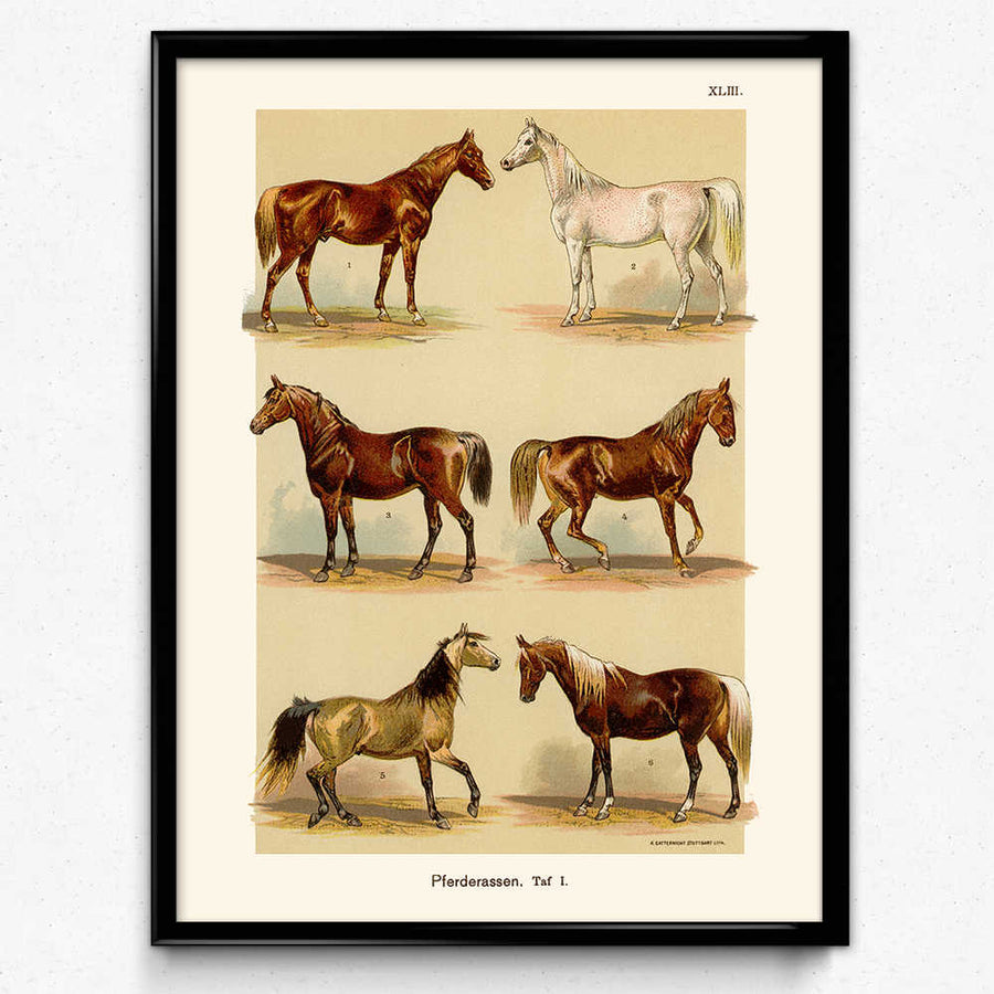 Chevaux Races Vintage Print 11 (VP1024) - Orion Wells