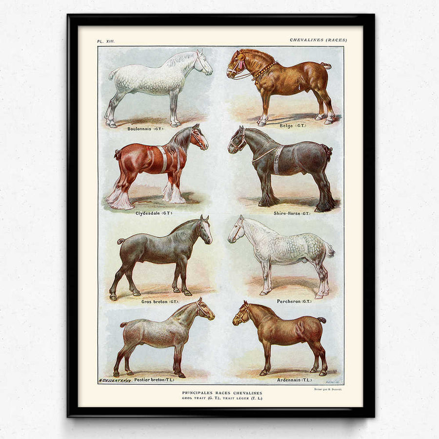 Horse Breeds Lot de 2 tirages vintage - Orion Wells