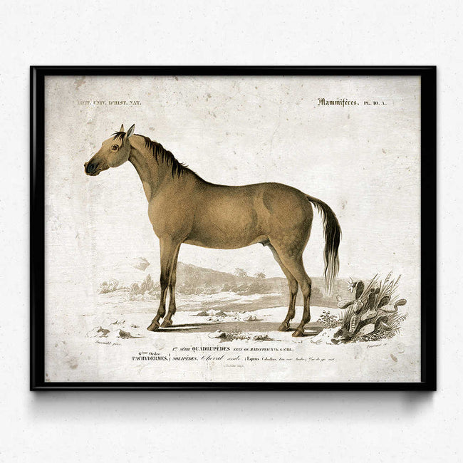 Horse Vintage Print 8 - VP1094 - Orion Wells