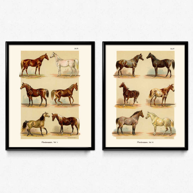 Horses Breeds Set of 2 (2) Vintage Prints (VP1025) - Orion Wells