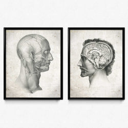 Shop for Anatomy Head Vintage Print Set of 2 - Orion Wells