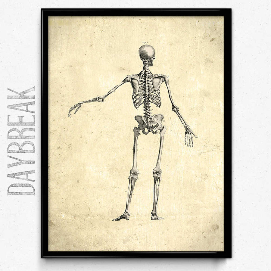Anatomy Skeleton Vintage Print Rear View Orion Wells