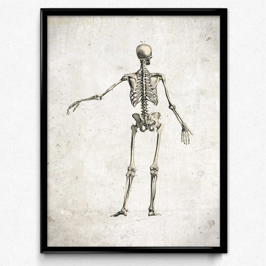 Shop for Anatomy Skeleton Vintage Print, Rear View - Orion Wells