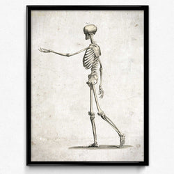 Osta Anatomy Skeleton Vintage Print, Side View - Orion Wells