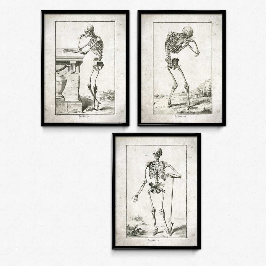 Human Skeletons Vintage Print Set of 3 쇼핑- Orion Wells