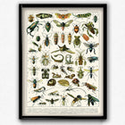 Shop for Insects Vintage Print 1 - VP1068 - Orion Wells