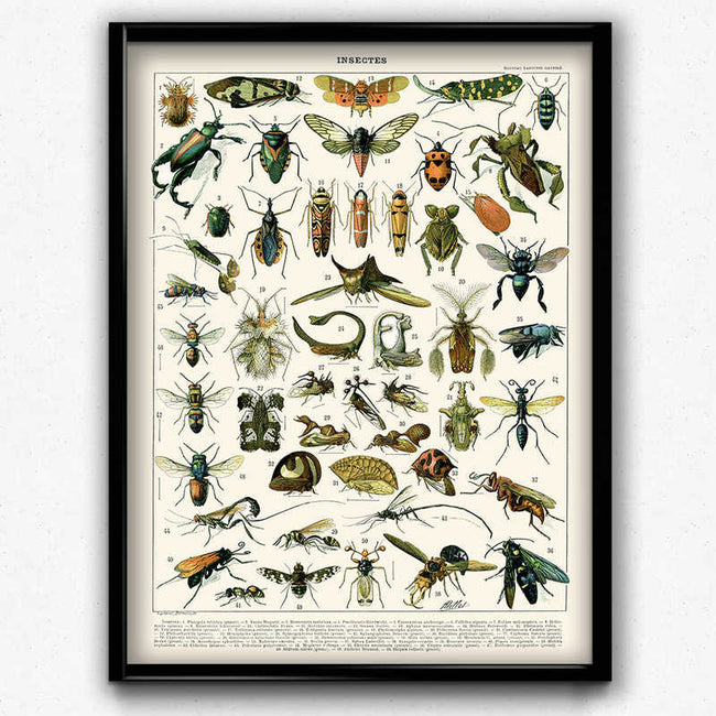 Insects Vintage Print 1 - VP1068 - Orion Wells