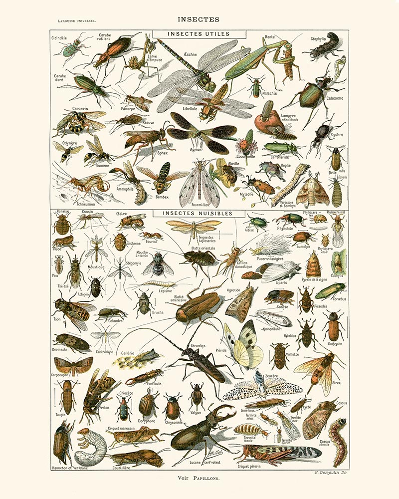 Insects Vintage Print 3-VP1070-Orion Wells 쇼핑