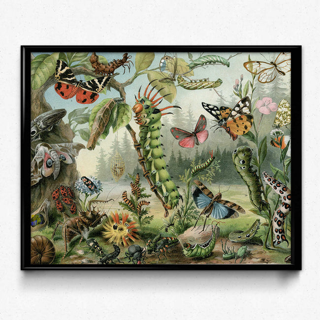 Shop for Insects Vintage Print 5 - Beautiful Artwork from Orion Wells - VP1130 - Orion Wells