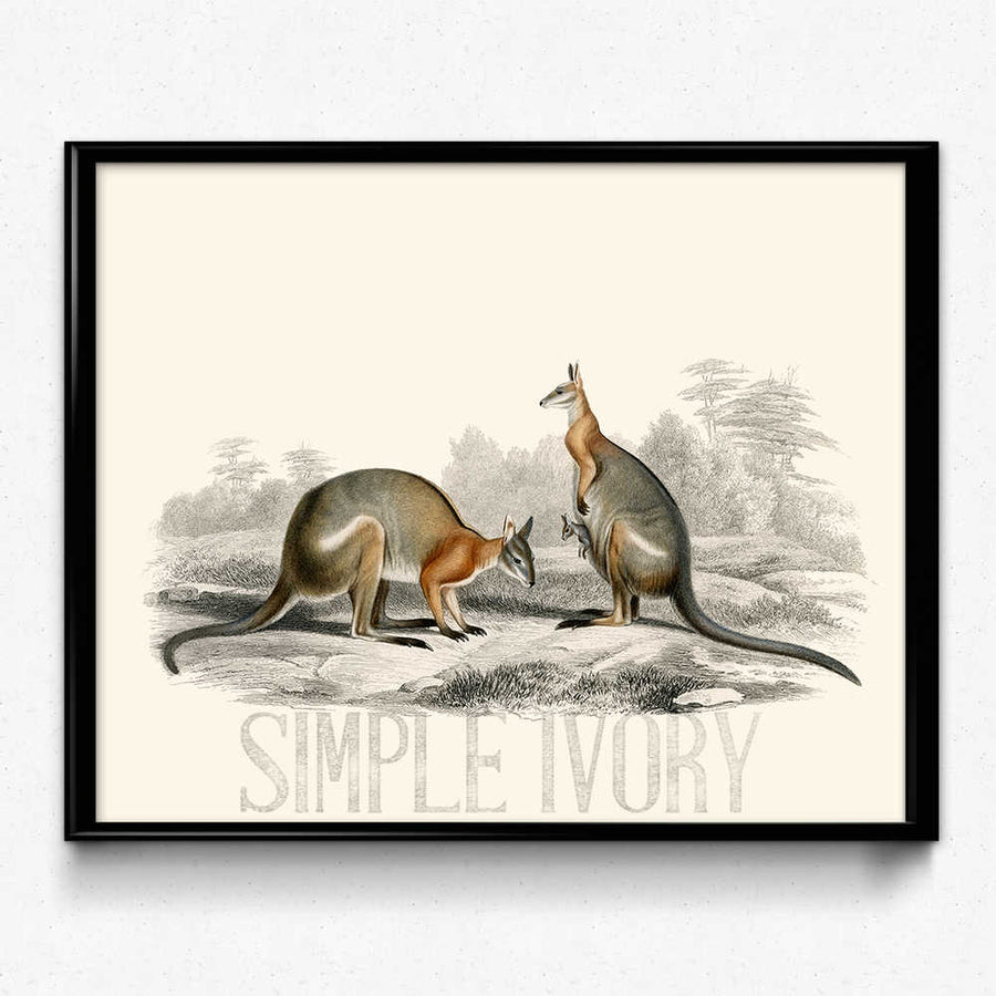 Shop for Kangaroo Outback Vintage Print - Orion Wells