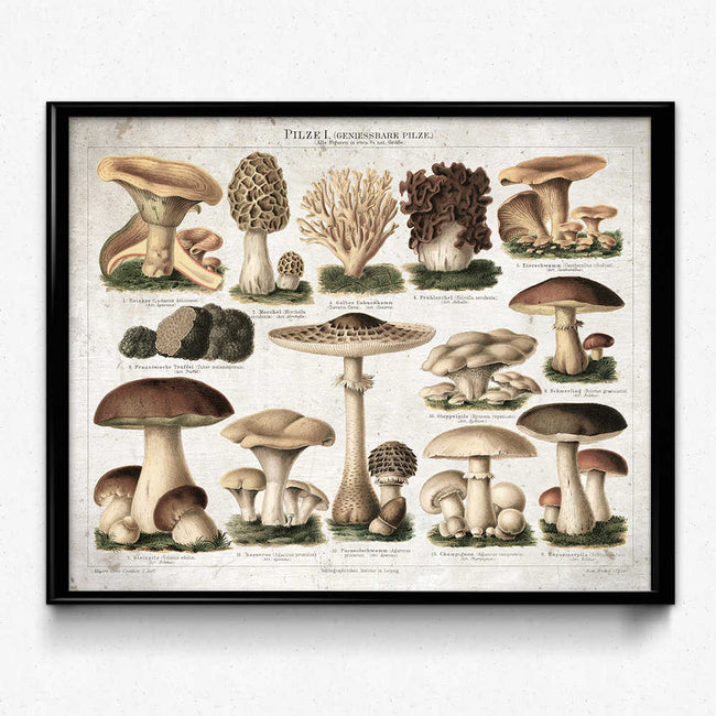 Shop for Mushroom Vintage Print 10 - Edible Mushrooms - Orion Wells