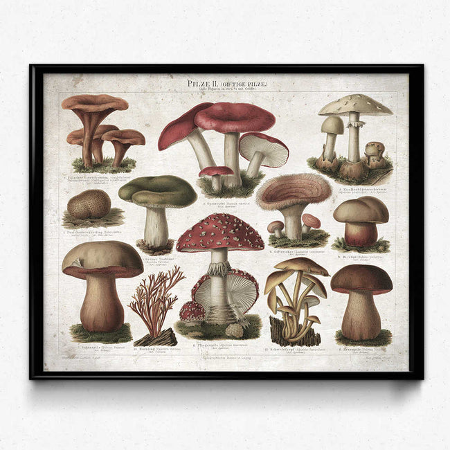 Shop for Mushroom Vintage Print 11 - Poisonous Mushrooms - Orion Wells