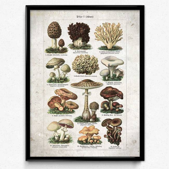 Shop for Mushroom Vintage Print 21 - Edible Mushrooms VP1096 - Orion Wells