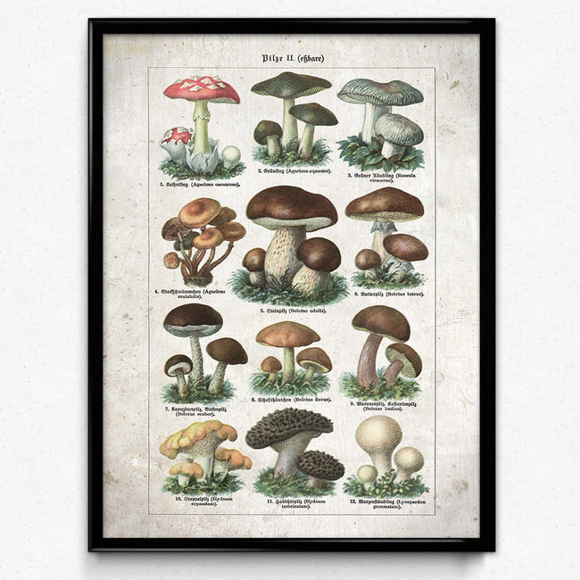 Shop for Mushroom Vintage Print 22 - Edible Mushrooms VP1097 - Orion Wells