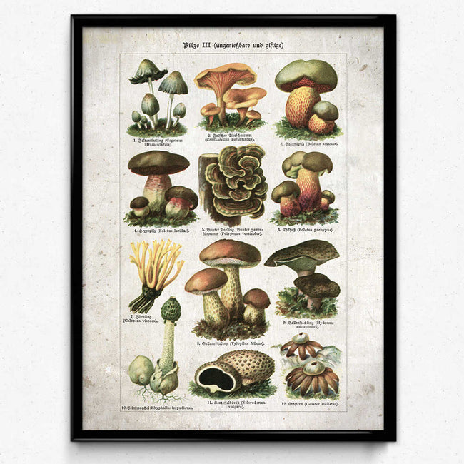 Shop for Mushroom Vintage Print 23 - Poisonous Mushrooms VP1098 - Orion Wells