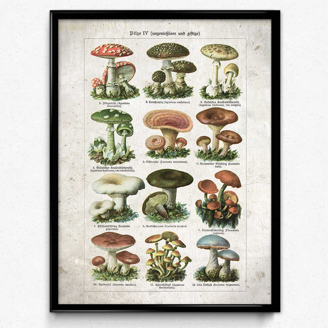 Shop for Mushroom Vintage Print 24 - Poisonous Mushrooms VP1099 - Orion Wells