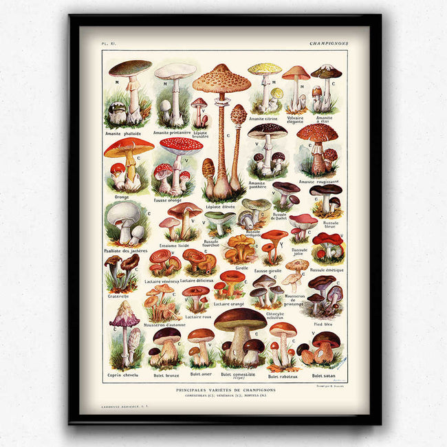 Shop for Mushroom Vintage Print 3 - VP1017 - Orion Wells