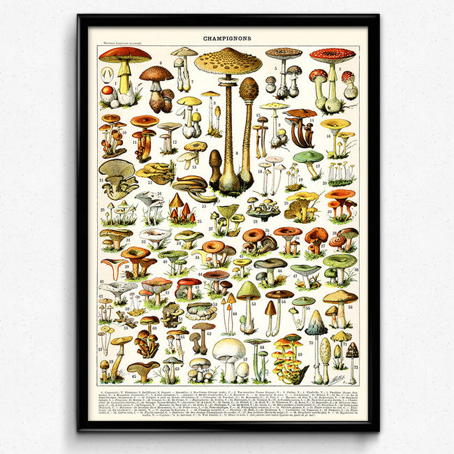 Shop for Mushroom Vintage Print 1 - VP1015 - Orion Wells