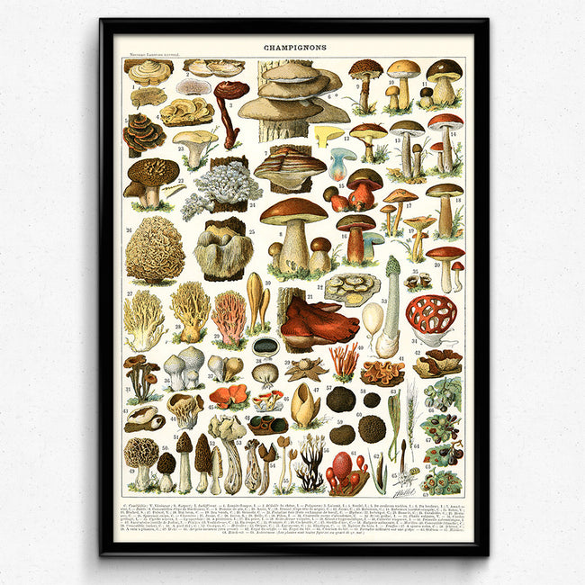 Shop for Mushroom Vintage Print 2 - VP1016 - Orion Wells