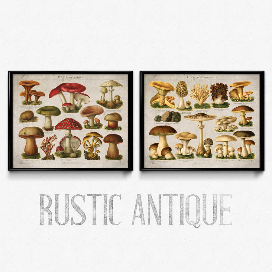 Shop for Mushroom Vintage Print Set of 2 (2) - VP1082 - Orion Wells