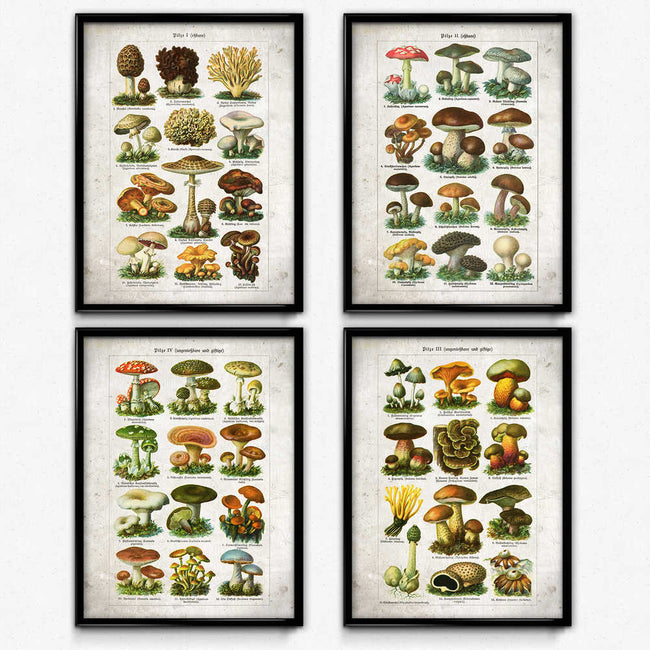 Shop for Mushroom Vintage Print Set of 4 (2) - Orion Wells