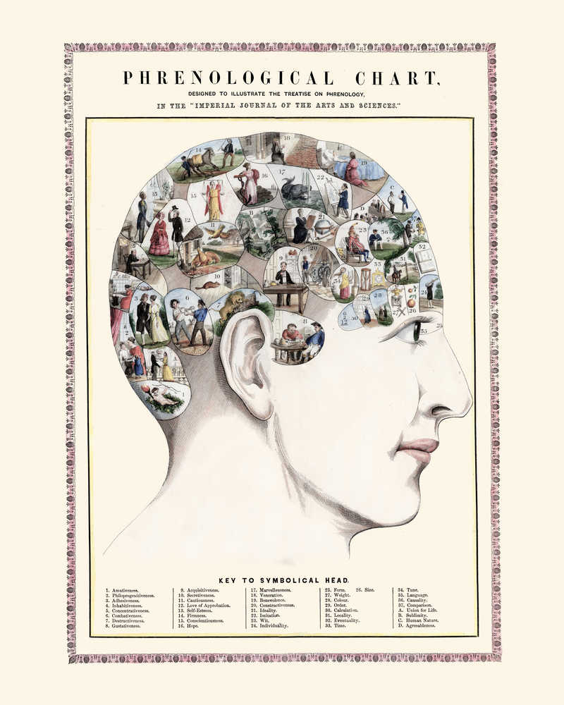 Shop for Phrenology Head Vintage Print - VP1084 - Orion Wells