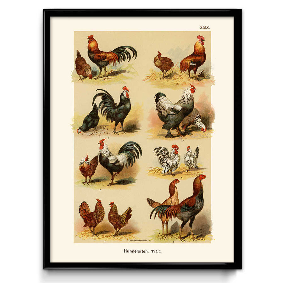 Shop for Chickens, Hens, and Roosters Breeds Vintage Print (VP1075) - Orion Wells