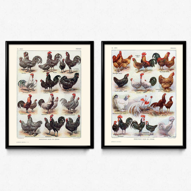 Chickens, Hens, and Roosters Breeds Vintage Print Set of 2 - Orion Wells
