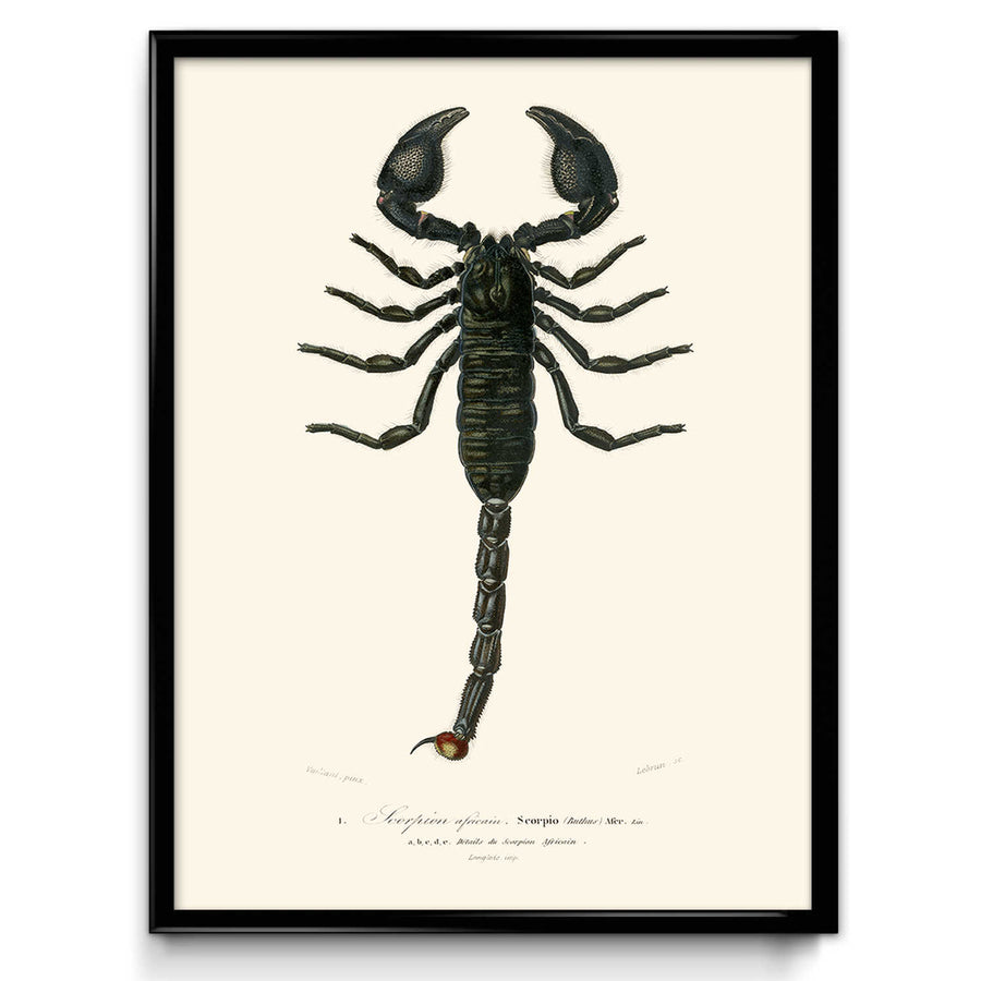 Scorpion Vintage Print 1 - VP1112 - Orion Wells