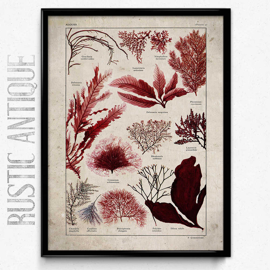 Osta Sea Ferns Vintage Print 1 - Orion Wells