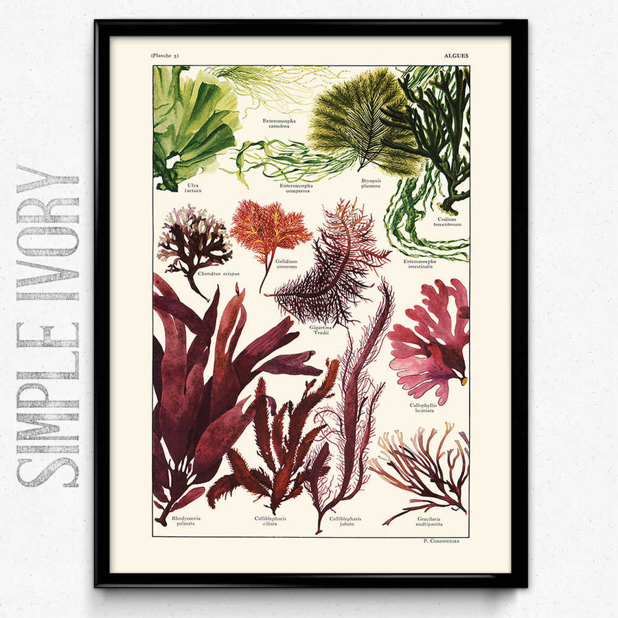 Sea Ferns Vintage Print 2 구매- Orion Wells