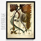 Sea Ferns Vintage Print 3 - Orion Wells