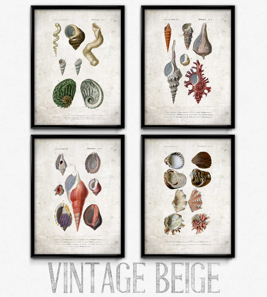 Osta Seashell Vintage Print Set of 4 - VP1081 - Orion Wells