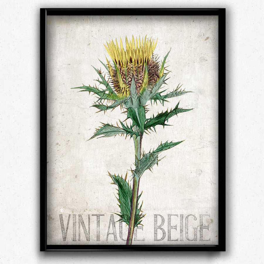 Yellow Thistle Vintage Print Orion Wells