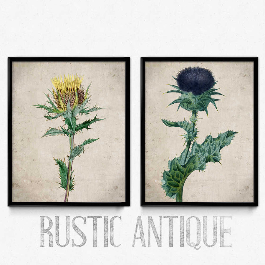 Thistle Vintage Print Set of 2 - Orion Wells