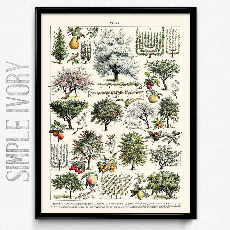 Arbres Illustration Vintage Print 1 (VP1065) - Orion Wells