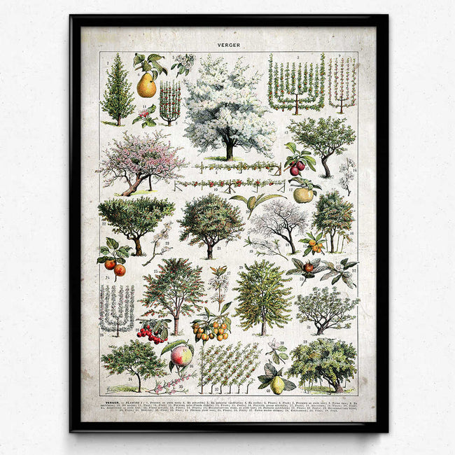 Trees Illustration Vintage Print 1 (VP1065) - Orion Wells