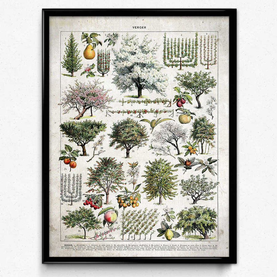 Osta Trees Illustration Vintage Print 1 (VP1065) - Orion Wells