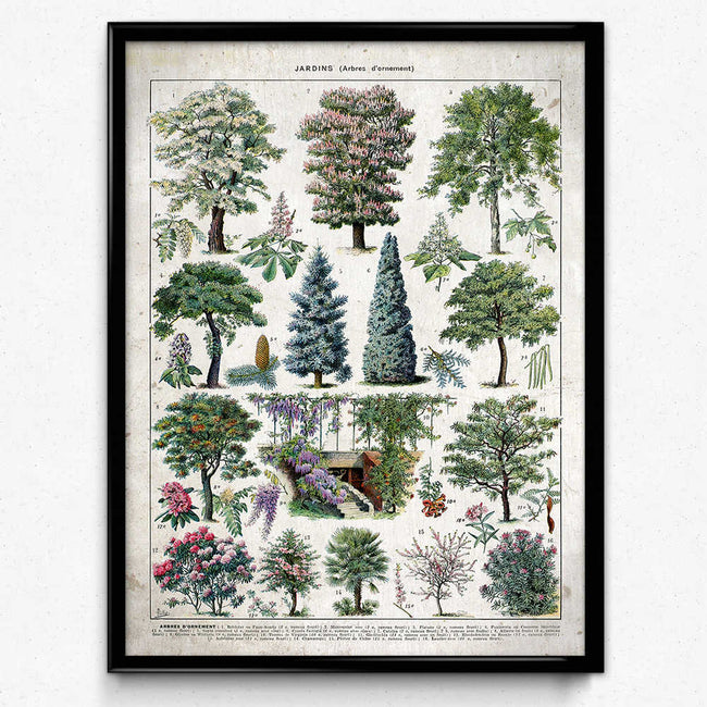 Garden Trees Illustration Vintage Print 2 (VP1066) - Orion Wells