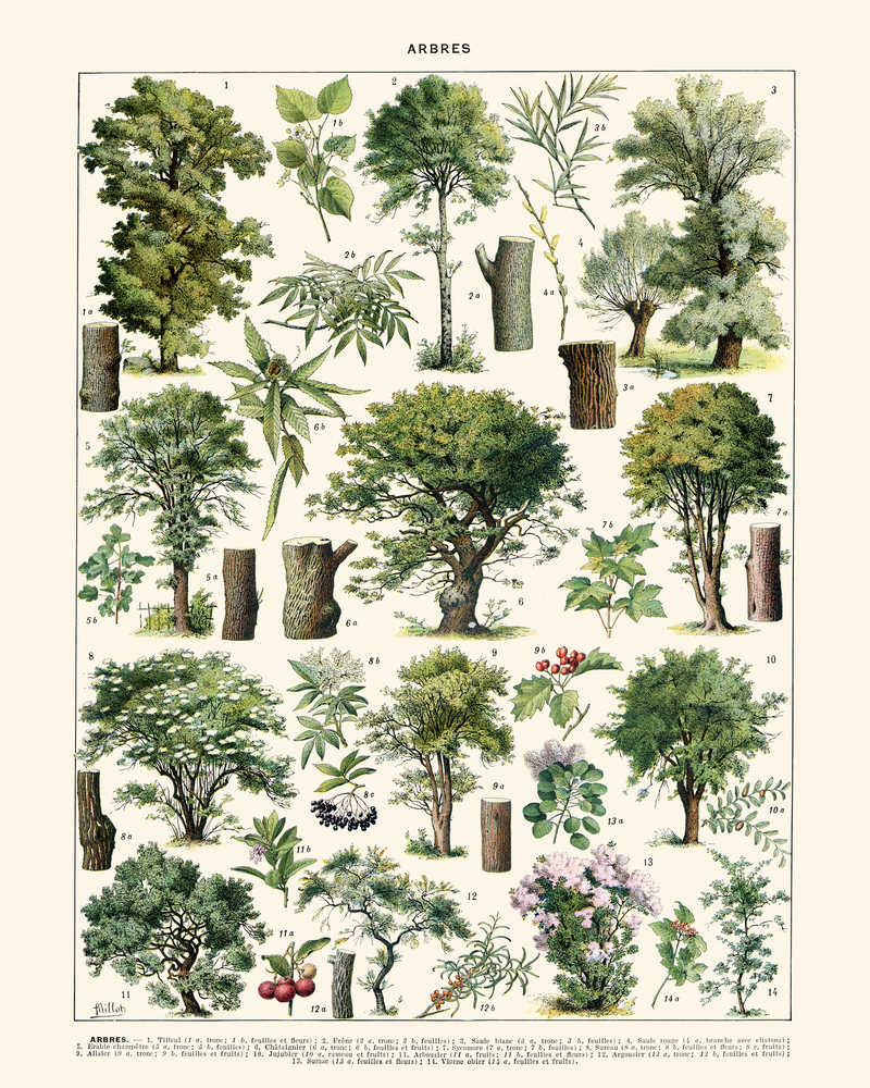 Arbres Illustration Vintage Print 3 (VP1092) - Orion Wells