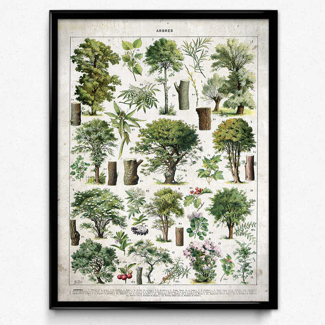 Trees Illustration Vintage Print 3 (VP1092) - Orion Wells