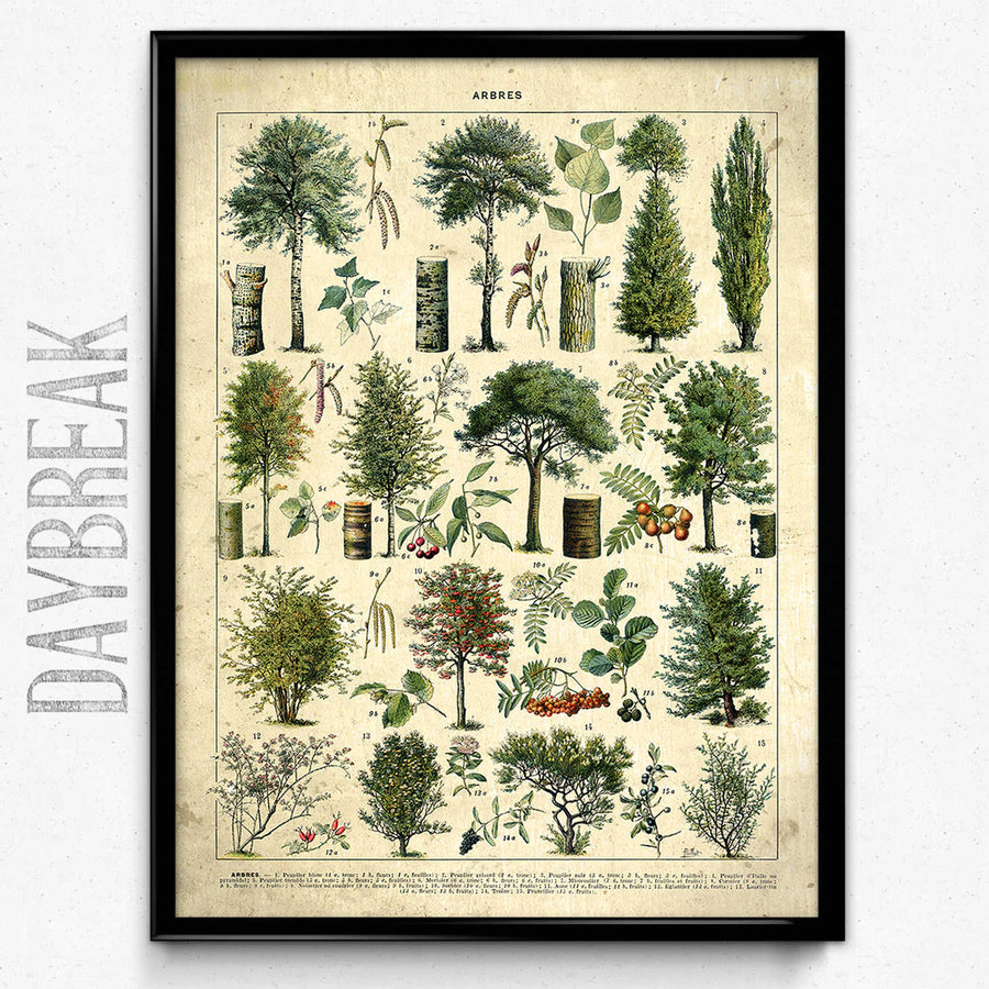 Arbres Illustration Vintage Print 4 VP1154 - Orion Wells